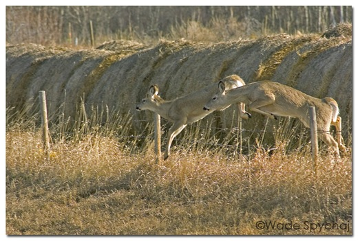 Deer%20Jump%20G3