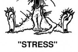 stress_cartoon[1] copy