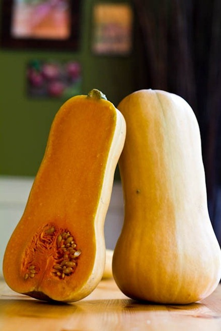 butternut   5 Favourite Butternut Squash Recipes