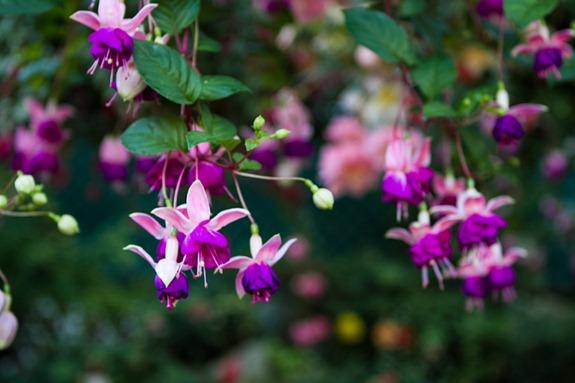 Butchart Gardens Victoria-5825