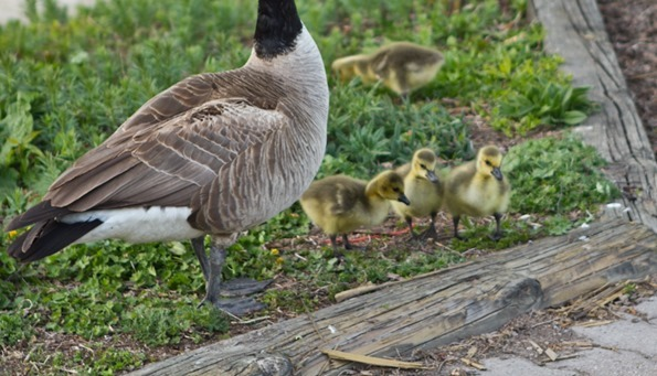 babygeese   8 Things I'm Loving Lately – The Food, Cosmetics, & Hockey Edition