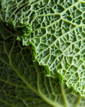 cabbage-1738
